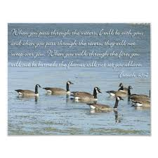 Isaiah 43 2 Bible Verse With Swimming Geese Photo Print Zazzle Com