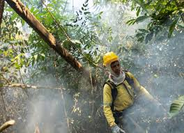 La Amazonía espera por Cumbre de Leticia