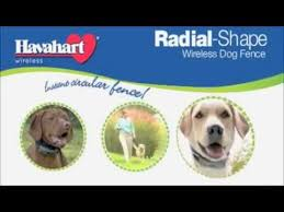 Havahart Wireless Radial Shape Wireless Electric Dog Fence Video Youtube