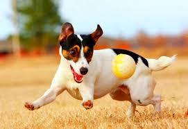 Ensine a brincar! – Meu Amigão Cão & Gato