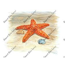 Starfish Printed Vinyl Decal Stk099 5 99 Almost Alive Lures The Best There Ever Was