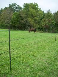 Minimizing Hazards For Horses Behind Electric Fences Pasturepro