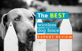 Top 10 Best Wireless Dog Fence Reviews 2020 Crittersitca