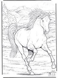 Paard 4 Kleurplaten Paarden
