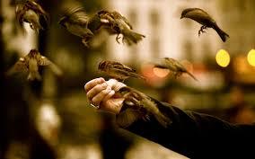 تحميل خلفيات العصافير الطيور المنطقة اليدين عريضة 1920x1200 جودة عالية Hd صور خلفيات