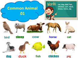 Chia sẽ] Dạy bé học tiếng anh bằng chủ đề con vật