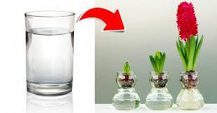 Szklanka wody wystarczy, aby wyhodować aż 13 różnych roślin ...