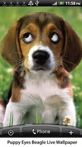puppy beagle live wallpaper for android