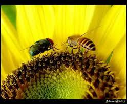 kata motivasi kisah lalat dan lebah