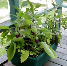 vegetable growing guides