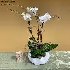 orchid trio in boca raton fl