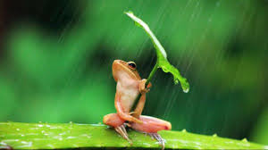 frogs hd wallpapers images pictures