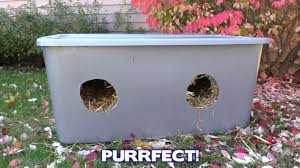 how to build an outdoor cat shelter