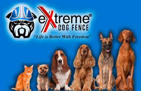 2020 Best Digital Premium Pet Containment Systems
