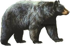 4 Inch Black Bear Removable Peel Self Stick Wall Decal Sticker Art Hunt Hunter Hunting Rustic Lodge Cabin Outdoor Wildlife Nature Home Decor 4 1 2 Inch Wide By 3 Inch Tall Wantitall