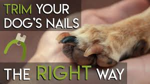 how to trim dog nails the right way