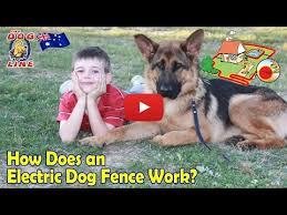 Electric Dog Fence Review Youtube