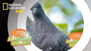 top 5 best pigeon repellents 2020