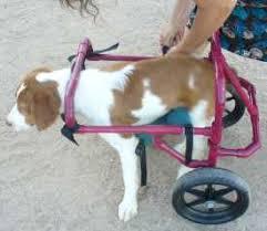 used dog wheelchair parison