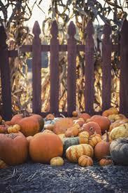 Orange Pumpkins On Brown Wooden Fence Photo Free Plant Image On Unsplash