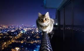 خلفيات ايباد قطط 2020 خلفيات عشاق القطط للايباد 2020 Ipad