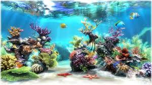 aquarium fish 3d wallpaper fish tank