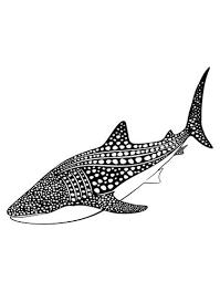 Whale Shark Vinyl Wall Decal Sticker Os Es109 Stickerbrand