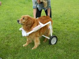 build dog wheelchair
