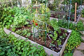 southern california mini farm