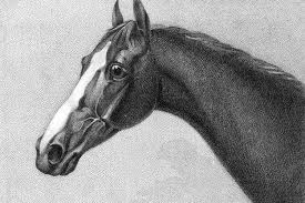 Image result for Stud record of racehorse High Hat