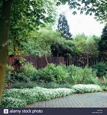 White Iberis Edging Garden Border In Front Of Fence Stock Photo Alamy