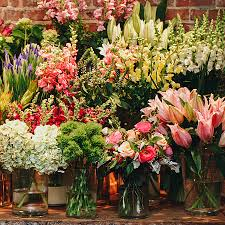 Plant and Flower Delivery NYC | Plantshed.com