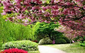صور فصل الربيع خلفيات جميلة عن الربيع رمزيات