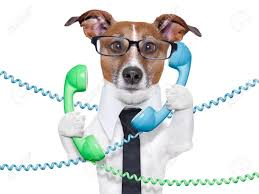 Dog Tangled In A Telephone And Cable Chaos Stock Photo, Picture ...