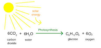 intro to photosynthesis article