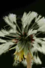 studi tentang evolusi tumbuhan