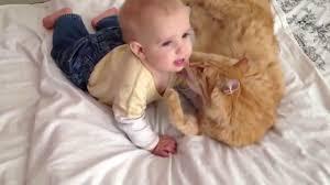 ضحك اطفال صغار يلعبون مع القطط والحيوانات الاليفة Cute And Funny