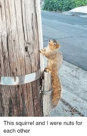 This Squirrel And I Were Nuts For Each Other Squirrel Meme On Me Me