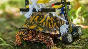 Buona fortuna Lego Turtle!