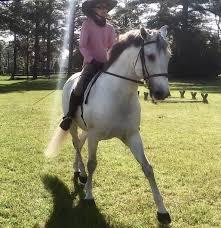 Adele Baker Grand Prix Dressage Fox Lake Farm Southern Pines, NC ...