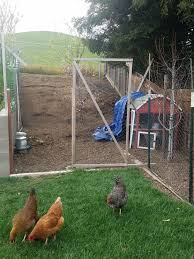 Quick Temporary Chicken Coop Ideas Backyard Chickens Learn How To Raise Chickens