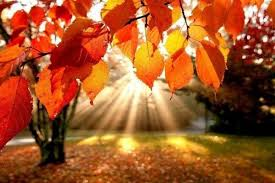 Сентябрь будет теплым и дождливым. Ждем грибную осень - Лента новостей  Чернигова