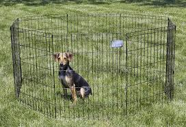 Best Portable Dog Fence For Large Dogs Bestdogfood Com