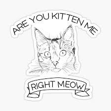 Grumpy Cat Stickers Redbubble