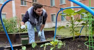 unt community garden continues to grow