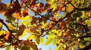 Track Autumn's arrival in Dorset - Mags4Dorset