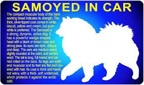 Samoyed Car Sticker Samoyed Dog Activities Working Breeds