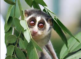 Pictures Of Animals With Big Eyes