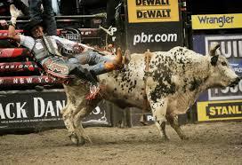 bull riding bullrider rodeo western