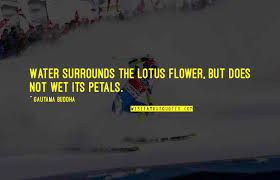 lotus flower quotes top famous quotes about lotus flower